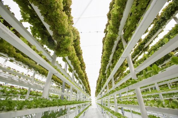 Feeding the Future of Agriculture with Vertical Farming